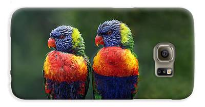 Parrot Galaxy S6 Cases