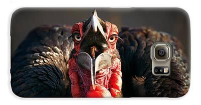 Hornbill Galaxy S6 Cases