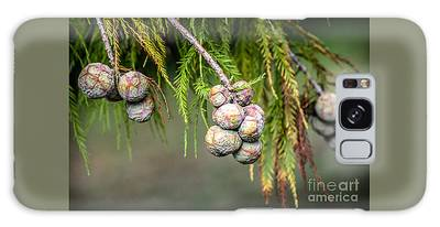 Bald Cypress Tree Seed Pods Galaxy Case