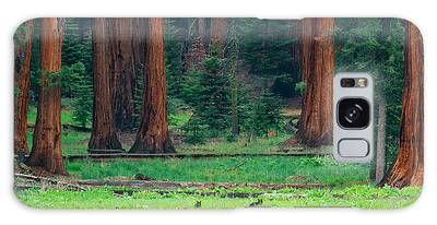 Bear In Sequoia National Park Galaxy Case