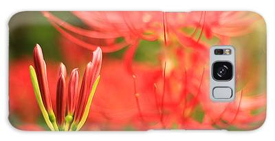 Beautiful Amaryllis Flower Red Spider Lily Aka Resurrection Lily Galaxy Case
