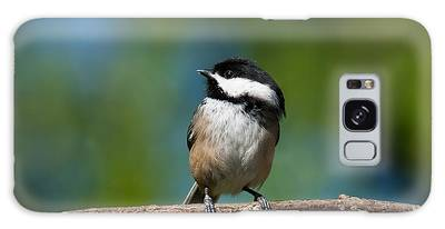 Black Capped Chickadee Perched On A Branch Galaxy Case