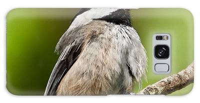 Black Capped Chickadee Singing Galaxy Case
