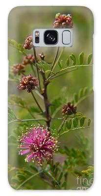 Catclaw  Mimosa Galaxy Case