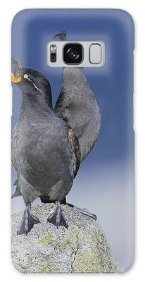 Auklets Galaxy Cases