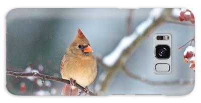 Female Cardinal On Cherry Tree In Snow Galaxy Case