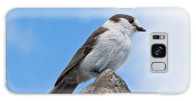 Gray Jay With Blue Sky Background Galaxy Case