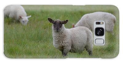 Designs Similar to Herd Of Sheep by DejaVu Designs