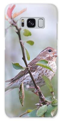 House Sparrow In The Apple Tree Galaxy Case