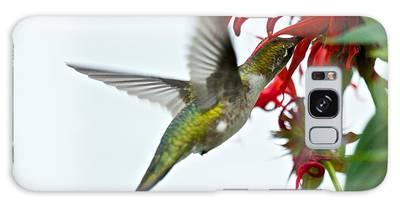 Hummingbird Focused On The Scarlet Bee Balm Galaxy Case