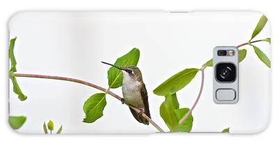 Hummingbird Hanging Out On The Honeysuckle Galaxy Case
