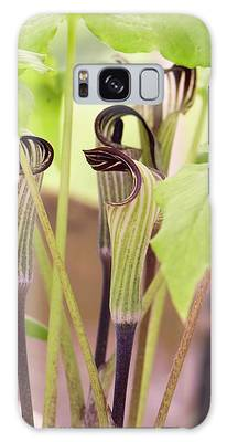 Jack In The Pulpit Galaxy Cases