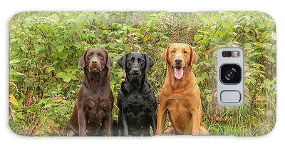 Designs Similar to Labrador Retrievers