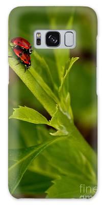Ladybug Ladybug Galaxy Case