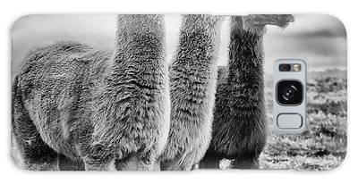Llama Galaxy S8 Cases