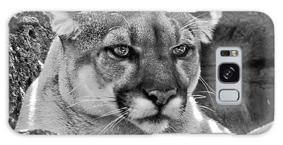 Mountain Lion Bergen County Zoo Galaxy Case