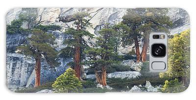 Old Juniper Pines Rule Galaxy Case