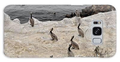 Pelicans Seals N Daisies  Galaxy Case