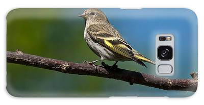 Pine Siskin Perched On A Branch Galaxy Case