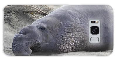 Point Piedras Blancas Elephant Seal 3 Galaxy Case