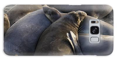 Point Piedras Blancas Elephant Seals 2 Galaxy Case