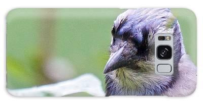 Quizzicle Blue Jay Galaxy Case