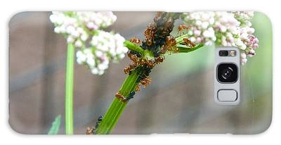 Red Ants And Valerian Officinalis Galaxy Case