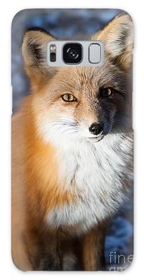 Red Fox Standing Galaxy Case