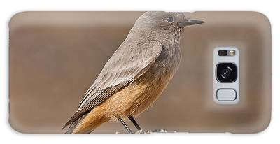 Say's Phoebe On A Fence Post Galaxy Case