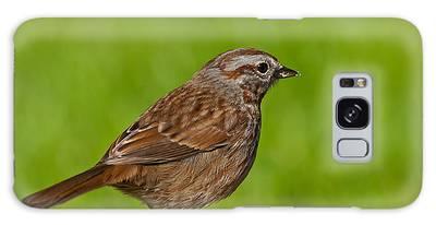 Song Sparrow On A Log Galaxy Case