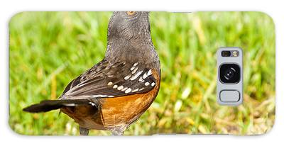 Spotted Towhee Looking Up Galaxy Case