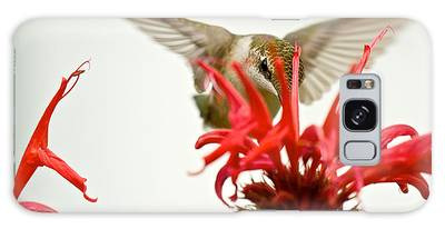 The Eye Of The Hummingbird Galaxy Case