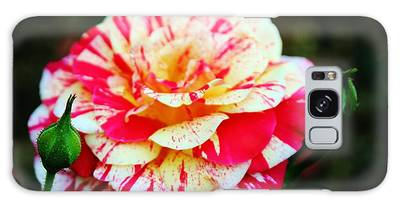 Galaxy Case featuring the photograph Two Colored Rose by Cynthia Guinn