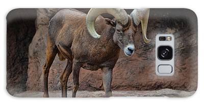 Desert Bighorn Sheep Ram I Galaxy Case