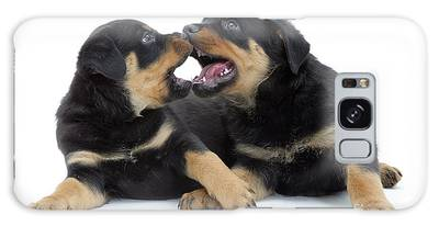 Designs Similar to Rottweiler Pups by Jane Burton