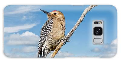 Male Gila Woodpecker Galaxy Case