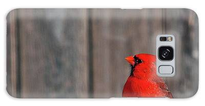 Cardinal Drinking Galaxy Case