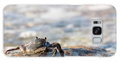 Crab Looking For Food Galaxy Case