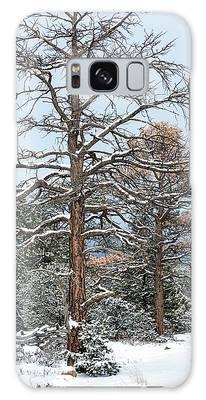 Dead Ponderosa Pines In Winter Galaxy Case