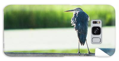 Early Morning Great Blue Heron Galaxy Case