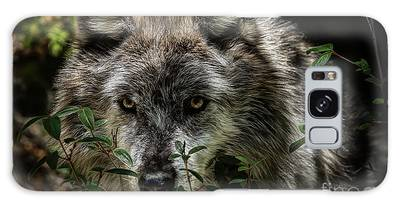 Galaxy Case featuring the photograph Grey Wolf by Brad Allen Fine Art
