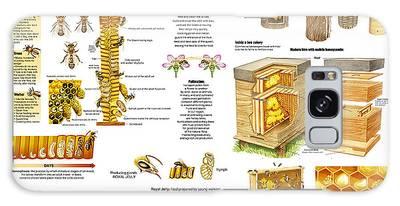 Honeybee Colonies Galaxy Cases