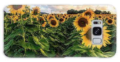 Long Island Sunflowers  Galaxy Case