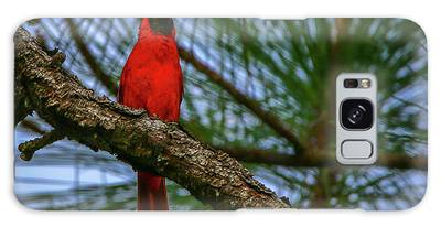 Galaxy Case featuring the photograph Perched Cardinal by Tom Claud
