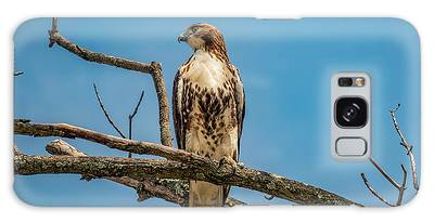 Red Tail Hawk Perched Galaxy Case