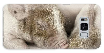 Galaxy Case featuring the photograph Sleeping Piglet by Brad Allen Fine Art