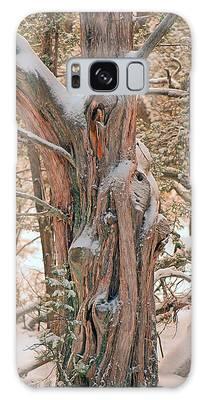 Snowy Dead Tree Galaxy Case