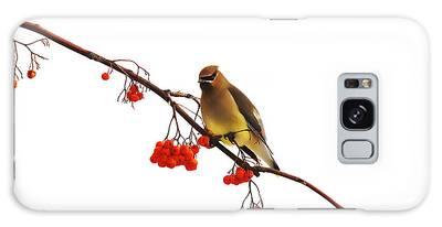 Winter Birds - Waxwing  Galaxy Case