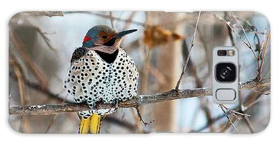 Yellow-shafted Northern Flicker Staying Warm Galaxy Case