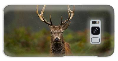 Highland Stag Photographs Galaxy Cases